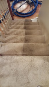 Horizon Carpet Care & Restoration